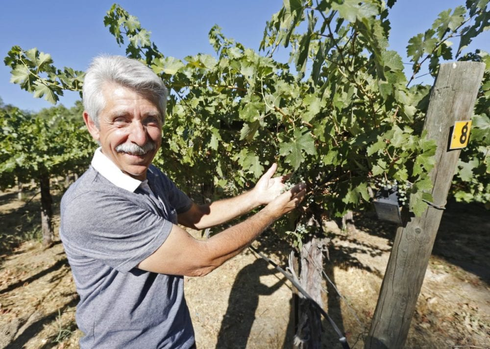 Danny Mascari stands in his vineyard - wineries in los angeles area