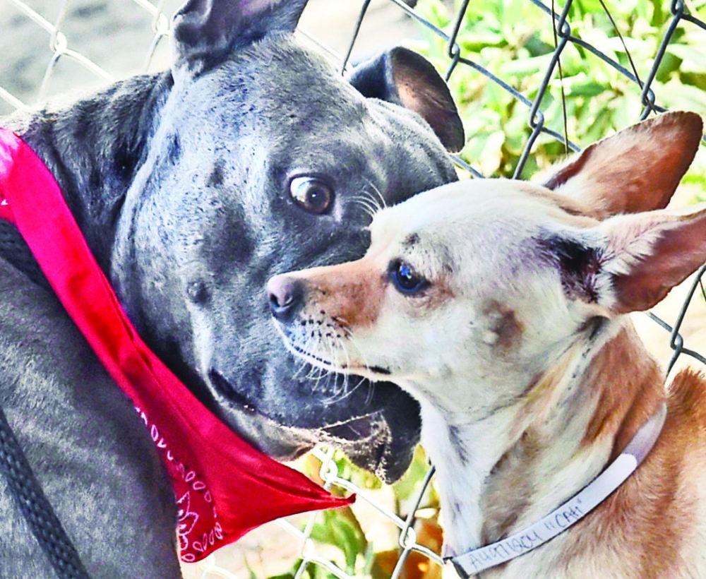 0910_pet_dog_behavior_dw-02a