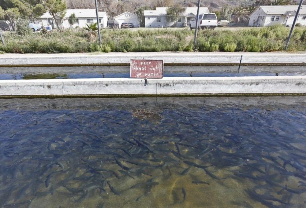 Fillmore Fish Hatchery