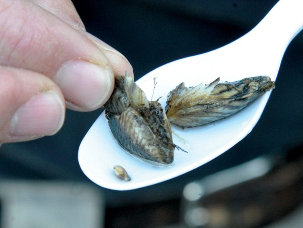 Water officials unite to fight quagga mussel threat