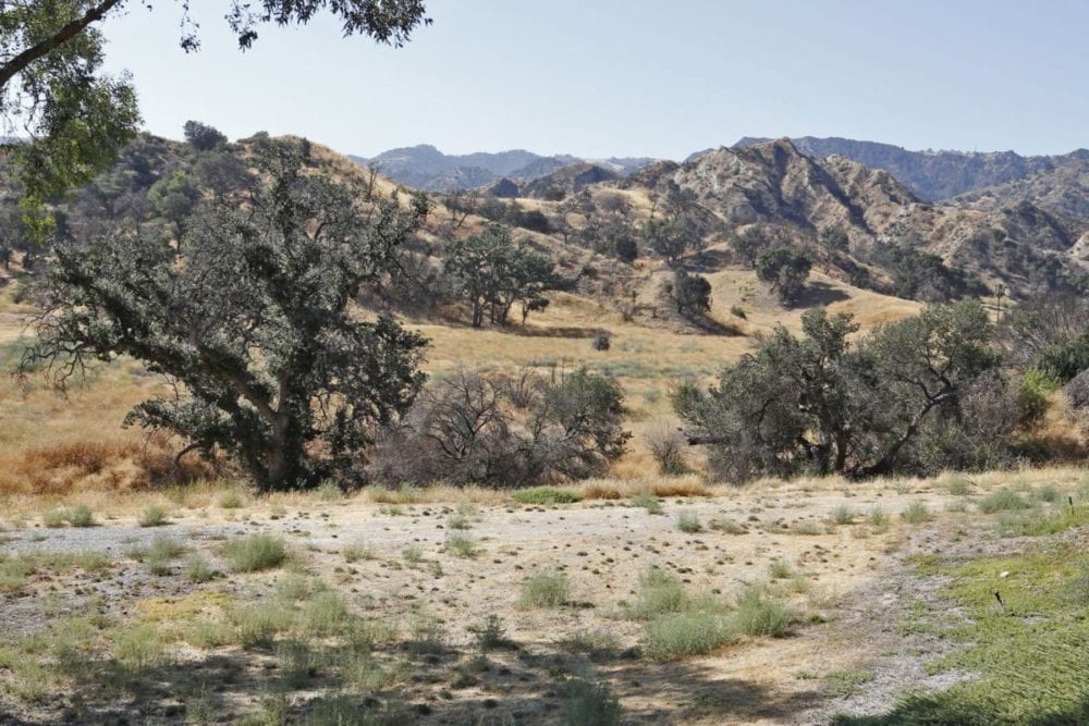 Tree cutting plan to be extended one year – Santa Clarita Valley