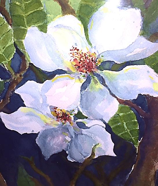 Magnolias in the Neighborhood_img