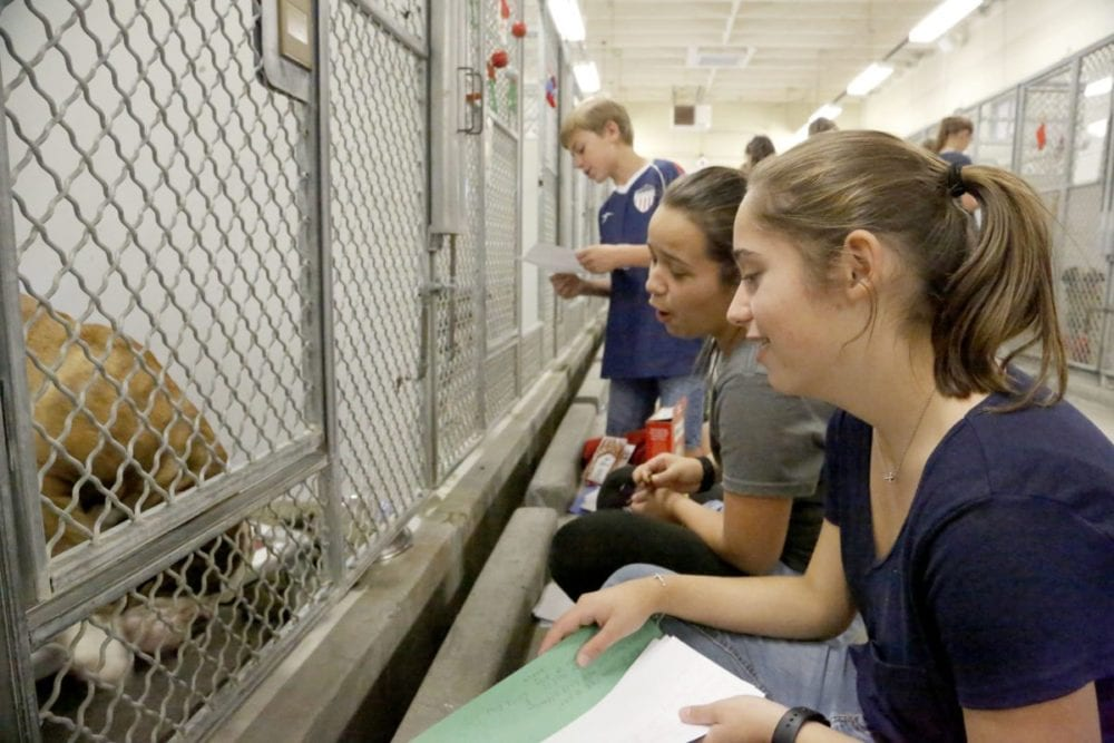KLAWS donates collars, gifts to Castaic Animal Care Center