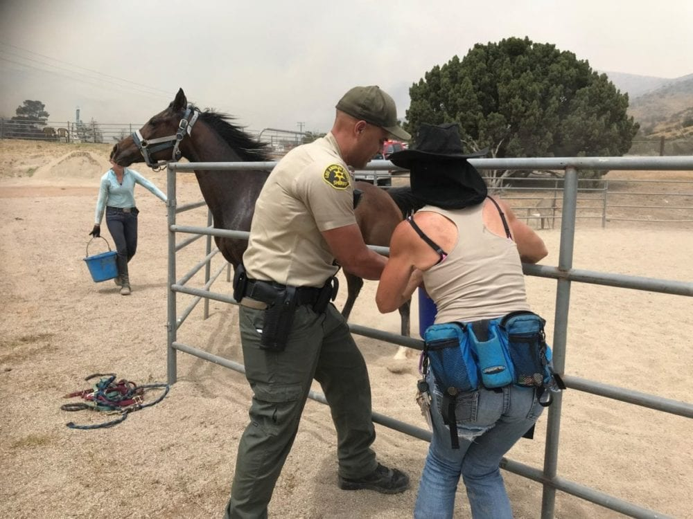 Animals removed from the scene of the Stone Incident fire in Agua Dulce. photo for The Signal by Jeff Zimmerman.