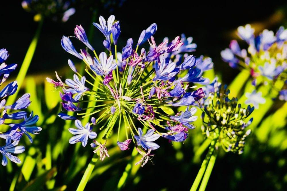 Spring blloms surrenderin to heat of summer.JRagsdale_062418