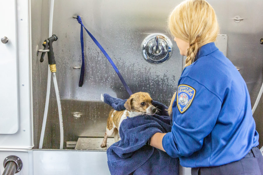 It's rub-a-dub-dub time for Castaic Animal Care Center's animals