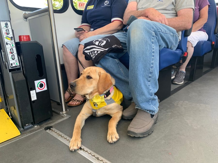 Take a ride with some of Guide Dogs of America's four-legged friends