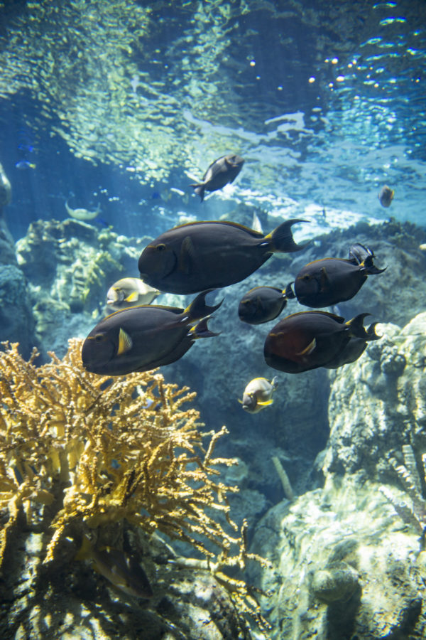 'Aquarium on Wheels' to visit Valencia Marketplace