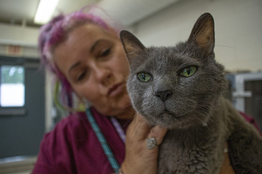 County's Animal Care experts look to help pet owners