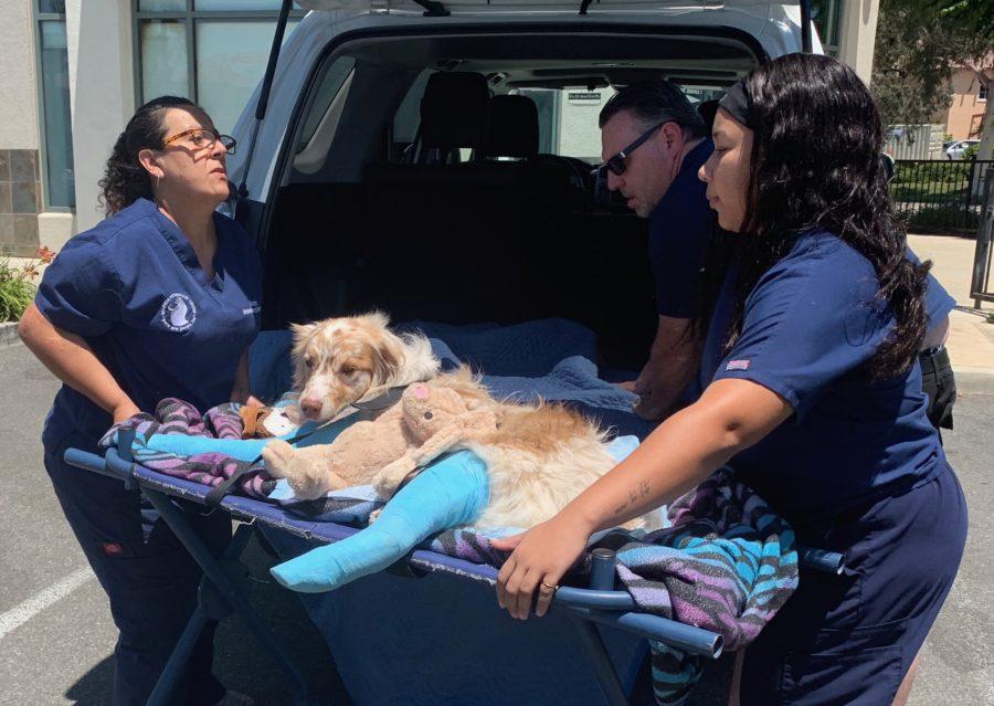 Man, dog involved in rollover crash prepare for surgery