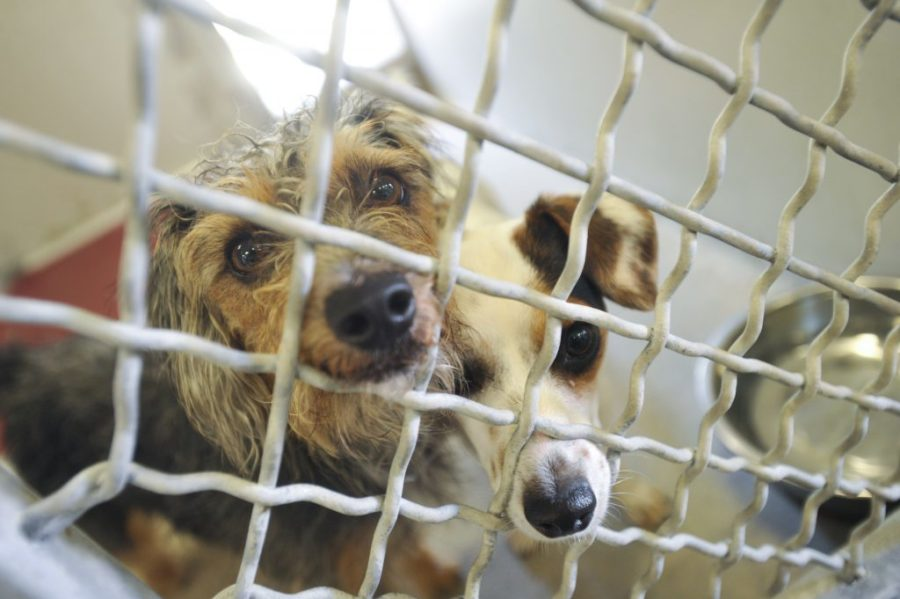 Animal shelters to offer discounted adoptions