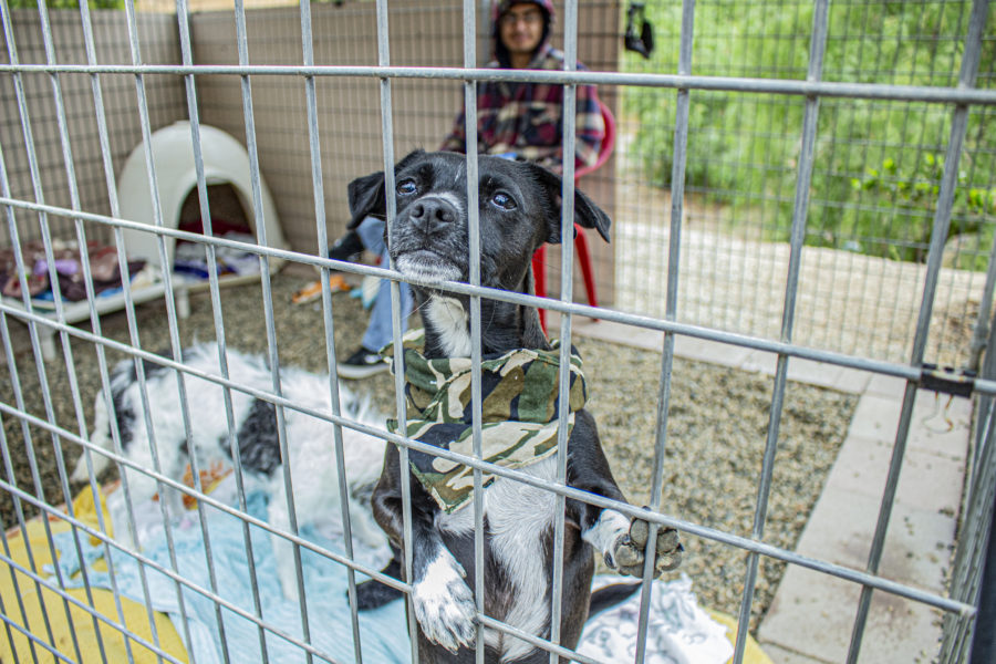 Spending 'A Day in Their Paws' at The Brittany Foundation