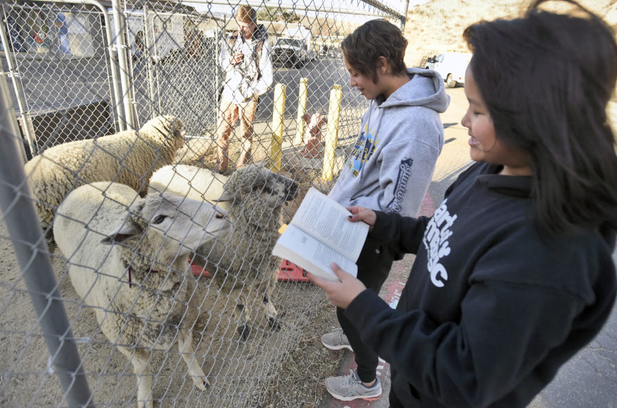 Mutual benefit: KLAWS reading program supports students, shelter animals