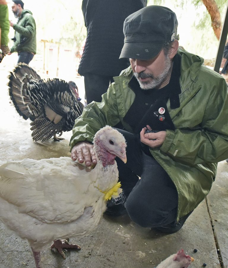 Gentle Barn: Where families feed turkeys on Thanksgiving Day