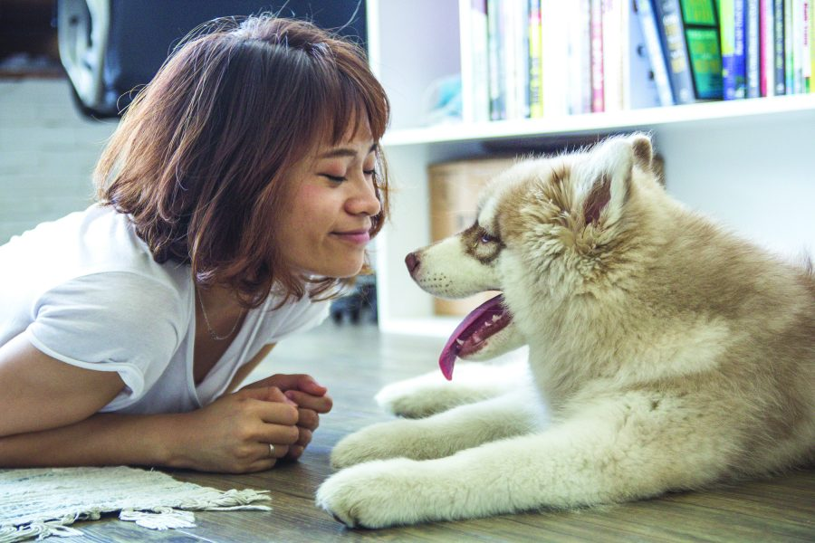 How to find the right dog for your family