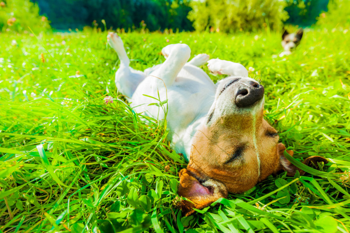 How to protect dogs from Lyme disease