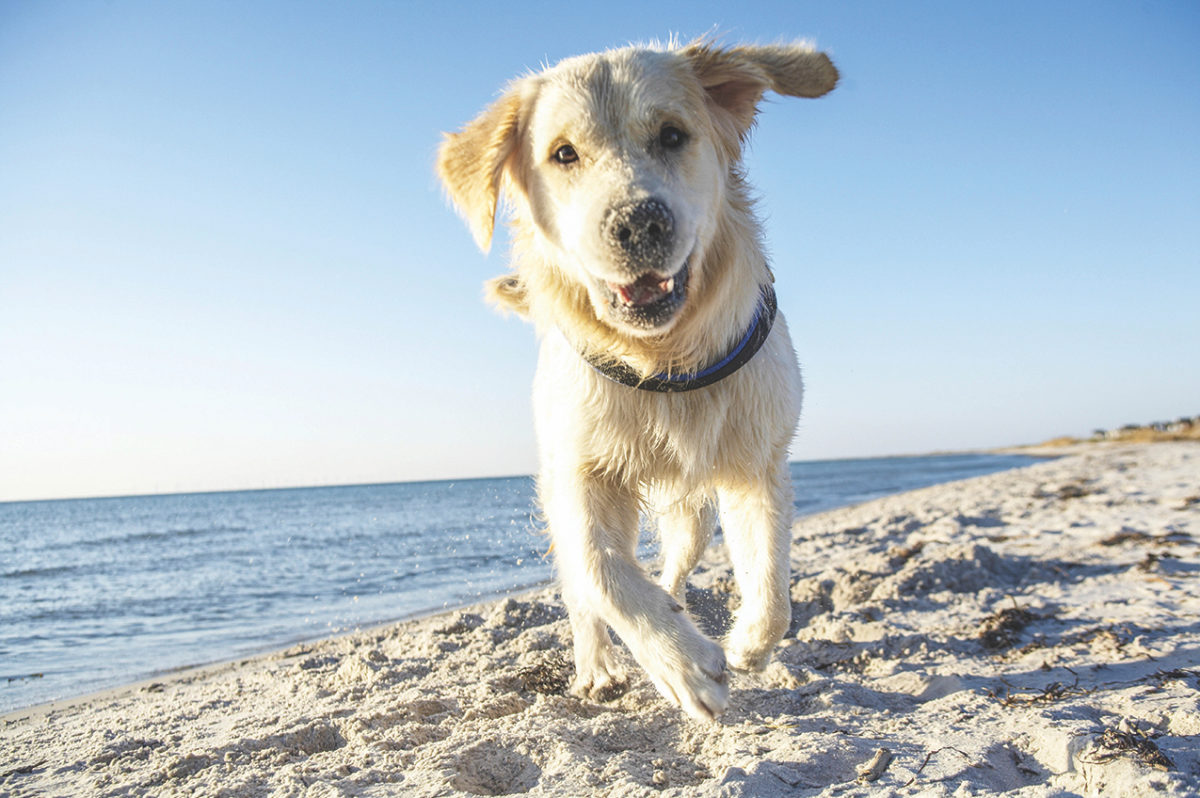 Dogs can be vulnerable to sunburn, too